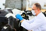 Ветеринар для сельхоз животных По вызову по Ташкенту